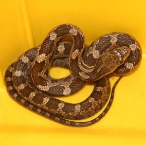 snake removal