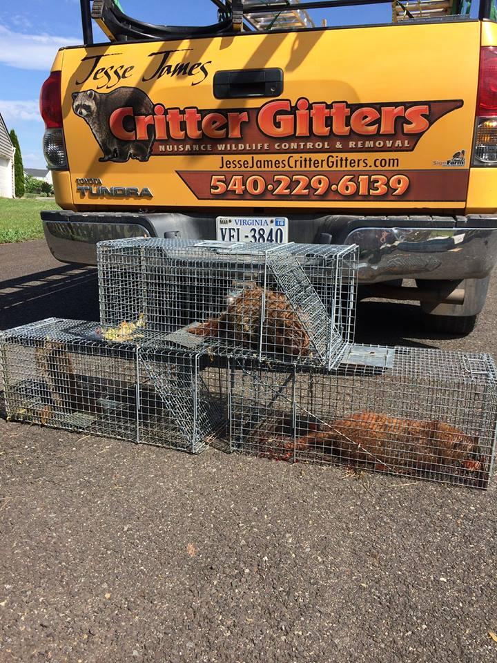 Groundhog removal
