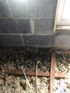 Bats in Houses
