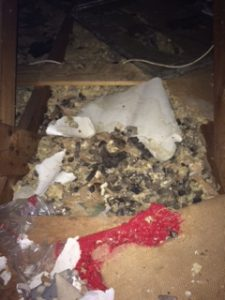 Attic Remediation Services